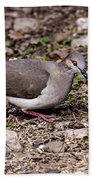 Whitetipped Dove Beach Towel