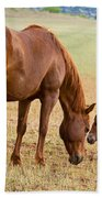 Wild Horse Mother And Foal Beach Towel