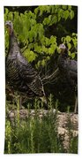 Wild Turkey Meleagris Gallopavo Beach Towel