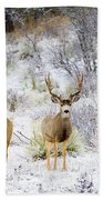 Winter Bucks Beach Towel