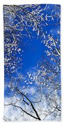 Winter Trees And Blue Sky Beach Towel