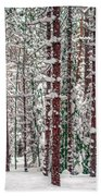 Winters Forest Beach Towel