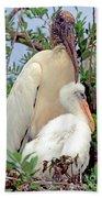 Wood Stork Mycteria Americana Beach Towel