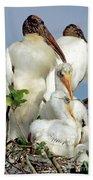 Wood Stork With Nestlings Beach Towel