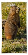 Yellow Bellied Marmot On Alert In  Rocky Mountain National Park Beach Towel