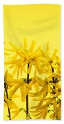 Yellow Forsythia Flowers Beach Towel