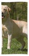 Yellow Labrador Retriever Beach Towel