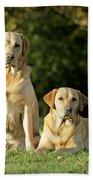 Yellow Labrador Retrievers Beach Towel