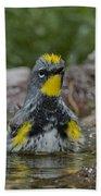 Yellow-rumped Warbler Beach Towel