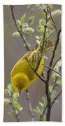 Yellow Warbler -1 Beach Towel
