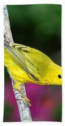 Yellow Warbler Dendroica Petechia Beach Towel