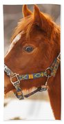 Young Horse In Winter Day Beach Towel