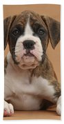 Boxer Puppy Beach Towel by Mark Taylor