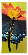 Eastern Black Swallowtail Butterfly Beach Towel