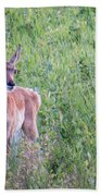 Pronghorn Antelope Portrait Beach Towel