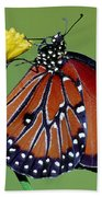 Queen Butterfly Beach Towel