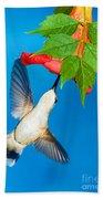 Ruby Throated Hummingbird Female Beach Towel