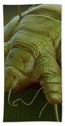 Scabies Mite Beach Towel