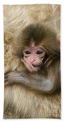 Baby Snow Monkey, Japan Beach Towel