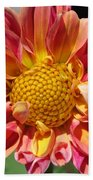 Dahlia From The Showpiece Mix Beach Towel