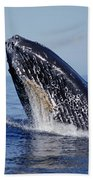 Humpback Whale Breaching Maui Hawaii Beach Towel