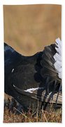 110714p155 Beach Towel