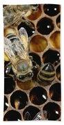 Honey Bees On Honeycomb Beach Towel