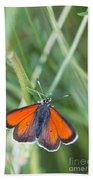 12 Balkan Copper Butterfly Beach Towel