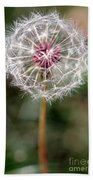 Dandelion Seed Head Beach Towel