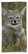 Patagonia Grey Fox Beach Towel
