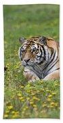 Siberian Tiger, China Beach Towel
