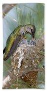 Annas Hummingbird Beach Towel