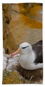 Black-browed Albatross Beach Towel