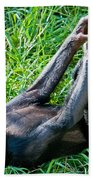 Bonobo Baby Beach Towel
