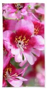 Schizanthus From The Hit Parade Mix Beach Towel