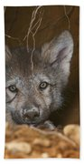 Timber Wolf Pup Beach Towel