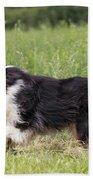 Australian Shepherd Dog Beach Towel