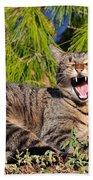 Cat In Hydra Island Beach Towel
