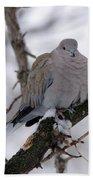 Eurasian Collard Dove Beach Towel