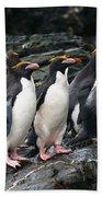Macaroni Penguin Beach Towel