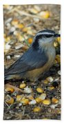 Nuthatch Beach Towel