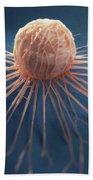Cancer Cell Beach Towel
