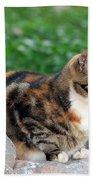Cat In Hydra Island Beach Towel