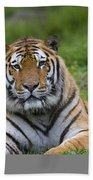 Siberian Tiger, China Beach Towel