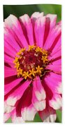 Zinnia From The Whirlygig Mix Beach Towel