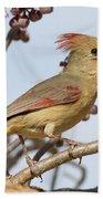 Birds Of The World Beach Towel