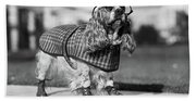 1930s Cocker Spaniel Wearing Glasses Beach Sheet