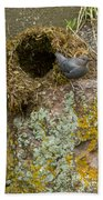 American Dipper And Nest   #1487 Beach Towel