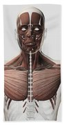 Anatomy Of Male Muscular System, Side Beach Towel