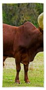 Ankole-watusi Cattle Beach Towel